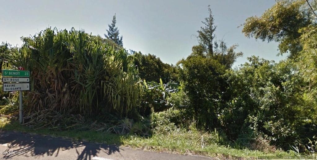 Végétation de la Réunion Banani10
