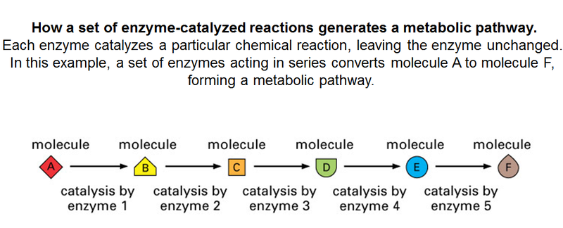 How Cellular Enzymatic and Metabolic networks  point to design Enzyme10