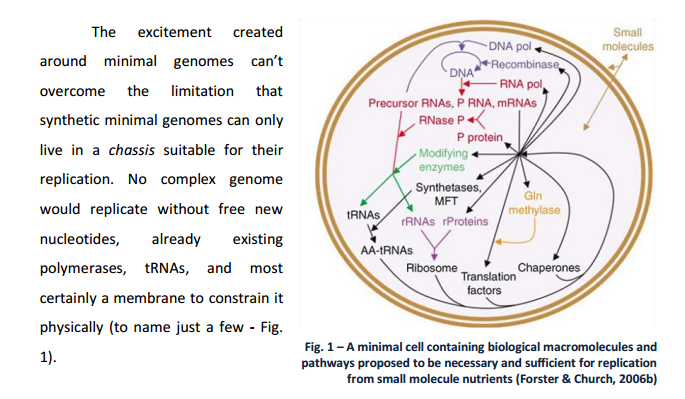 How Cellular Enzymatic and Metabolic networks  point to design Minimi10