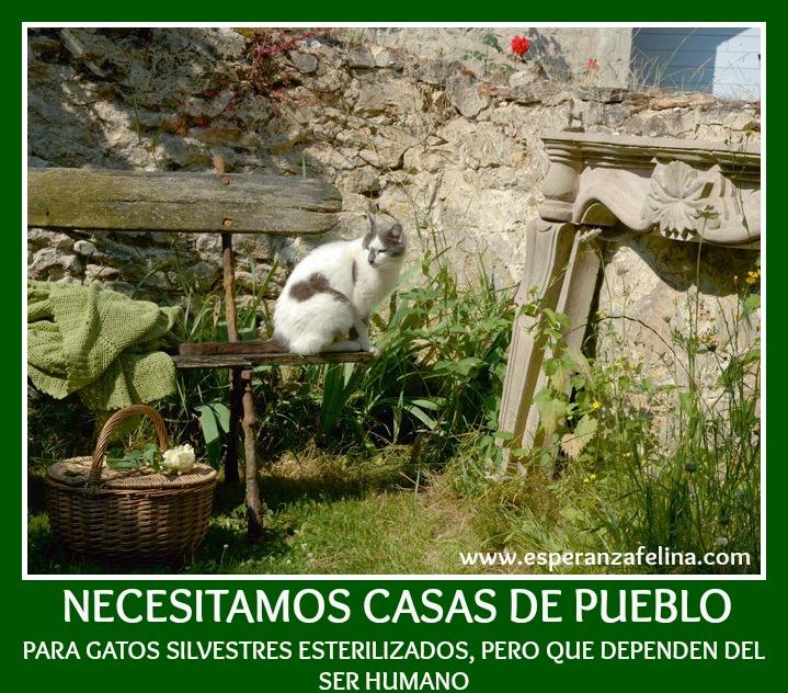 Necesitamos casas de pueblo para gatos silvestres esterilizados, Vitoria French10