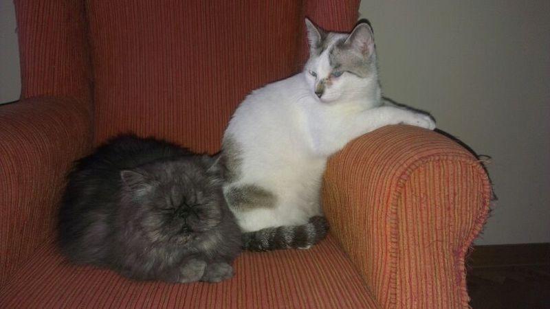 Buki el gato de los ojos tristes Img_2318
