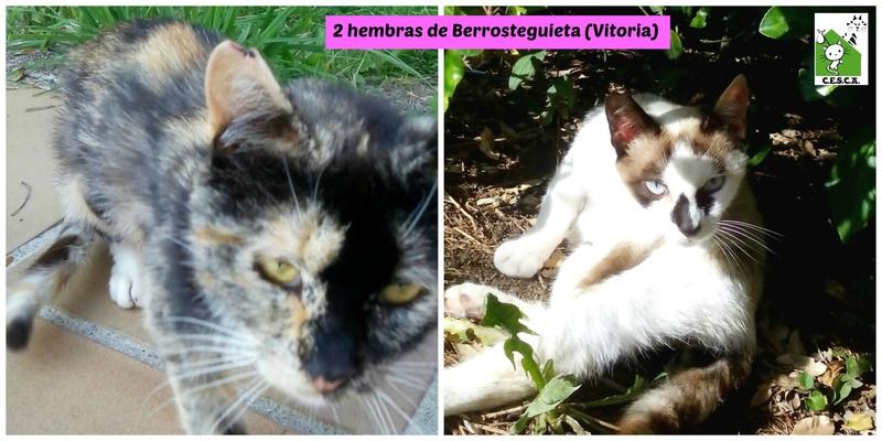 CESCA. La unión de Apa Sos Vitoria y Esperanza Felina por los gatos callejeros de Álava - Página 7 Picmon14