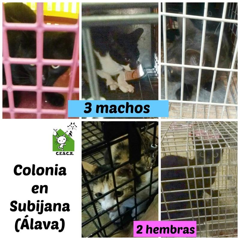 CESCA. La unión de Apa Sos Vitoria y Esperanza Felina por los gatos callejeros de Álava - Página 7 Picmon16