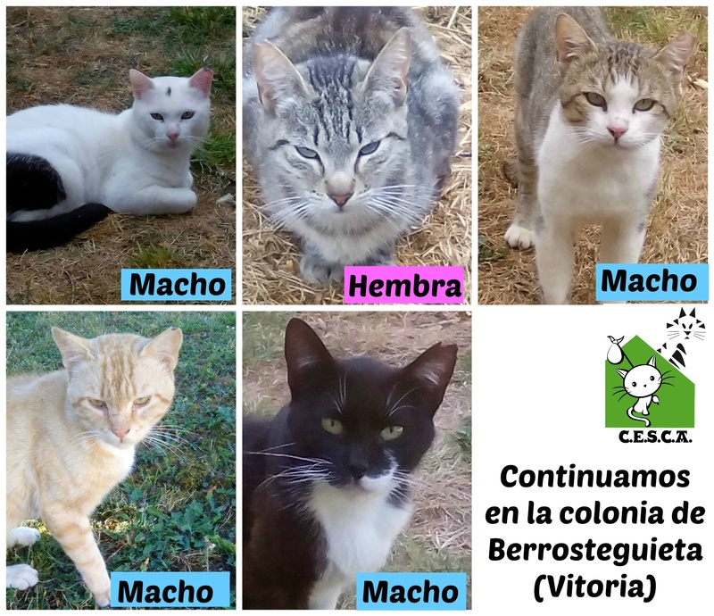 CESCA. La unión de Apa Sos Vitoria y Esperanza Felina por los gatos callejeros de Álava - Página 7 Picmon17