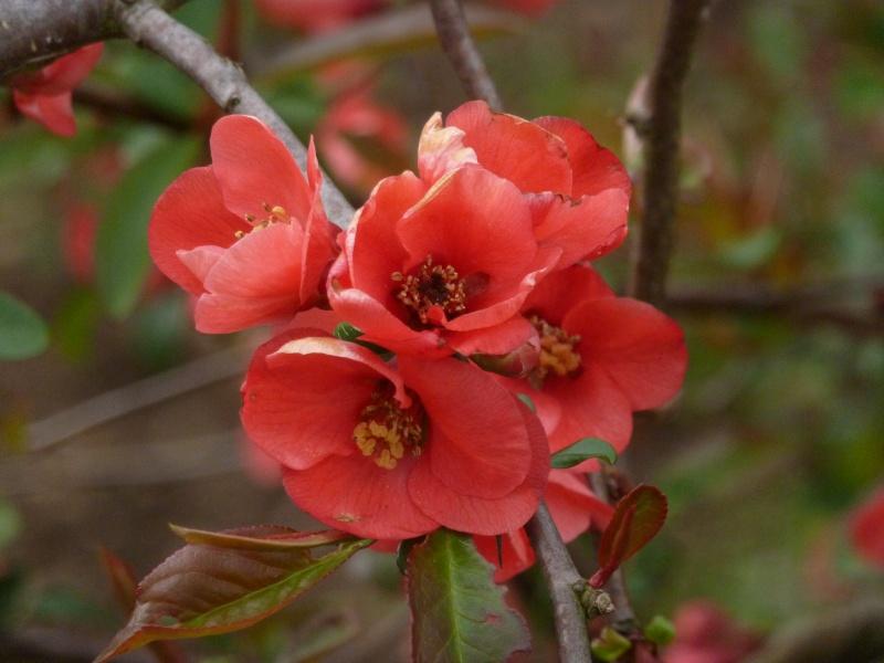 Photo fleur en macro P1040810