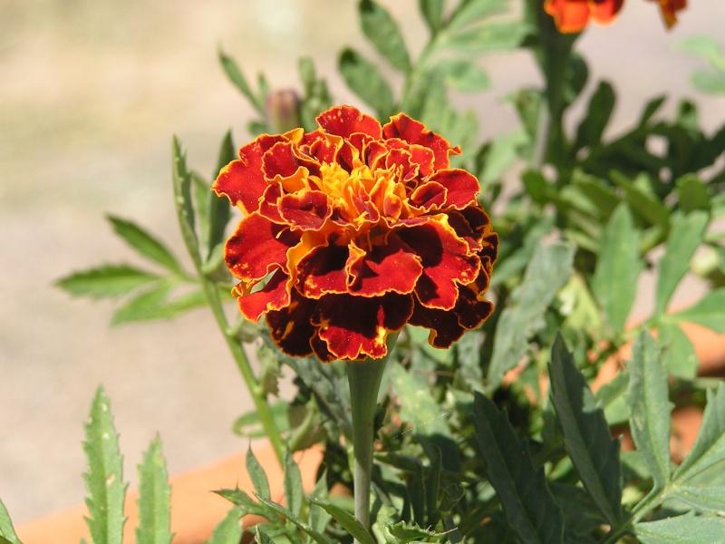 Photo fleur en macro P3220110