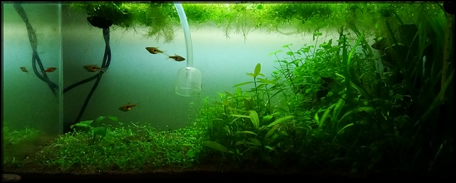 Mon 54L lowtech (Betta S) Global11