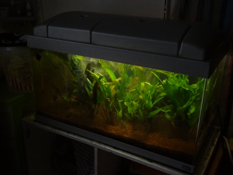 Mon 54L lowtech (Betta S) Global12