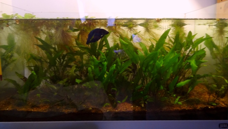 Mon 54L lowtech (Betta S) Global14