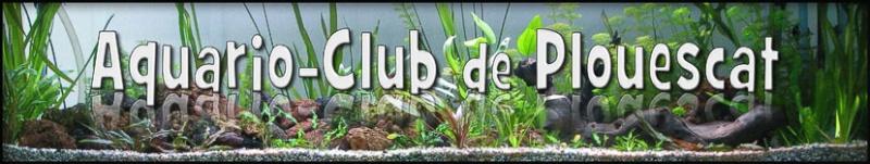 ACTIVITES CLUB AQUARIOPHILE DE PLOUESCAT Aquari10