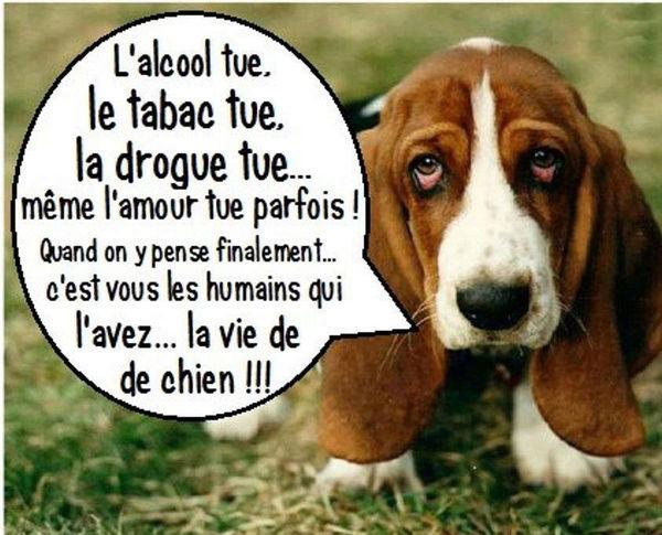 Humour en images - Page 2 68e16110