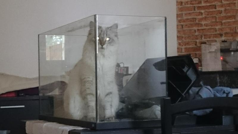 Loon, mon petit prince des chats :) Dsc_0713
