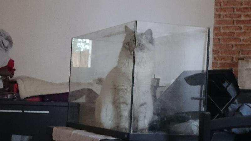 Loon, mon petit prince des chats :) Dsc_0714