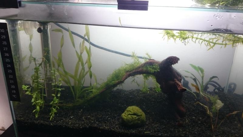 Lancement de 2 aquarium low tech Dsc_0716