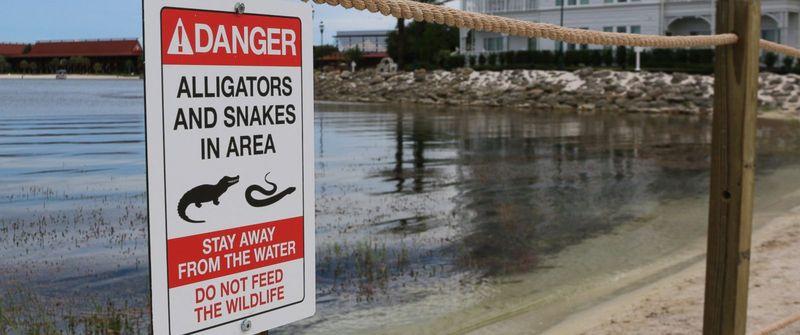 [Walt Disney World Resort] Un alligator tue un enfant au Grand Floridian - Page 5 Ht_dis10