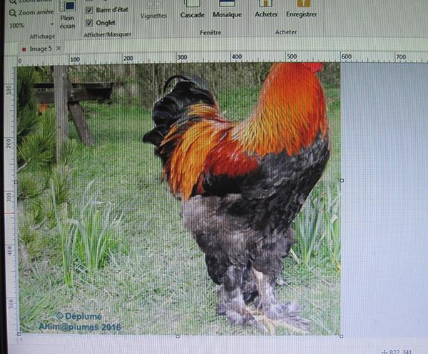 Vos captures d'écran à l'aide du logiciel Picpick Image_19