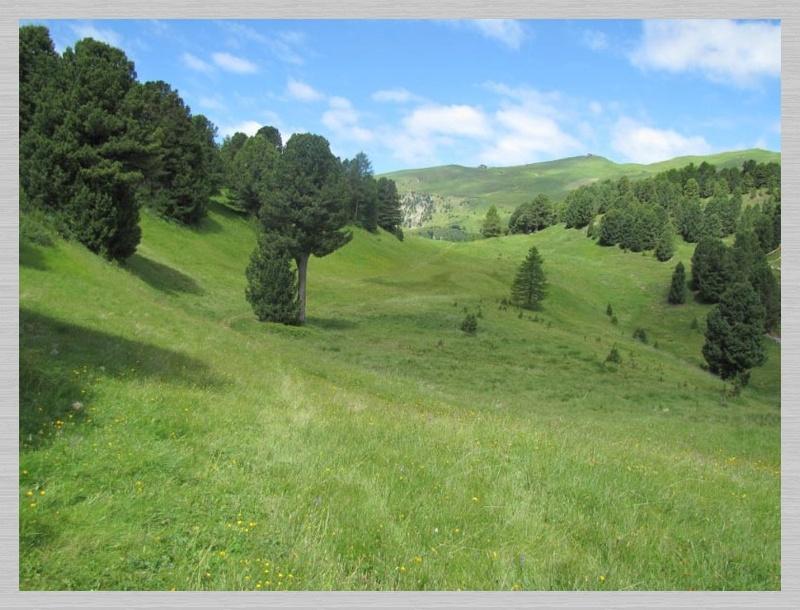 Dolomites (2 j)Col de Raiser Img_3615