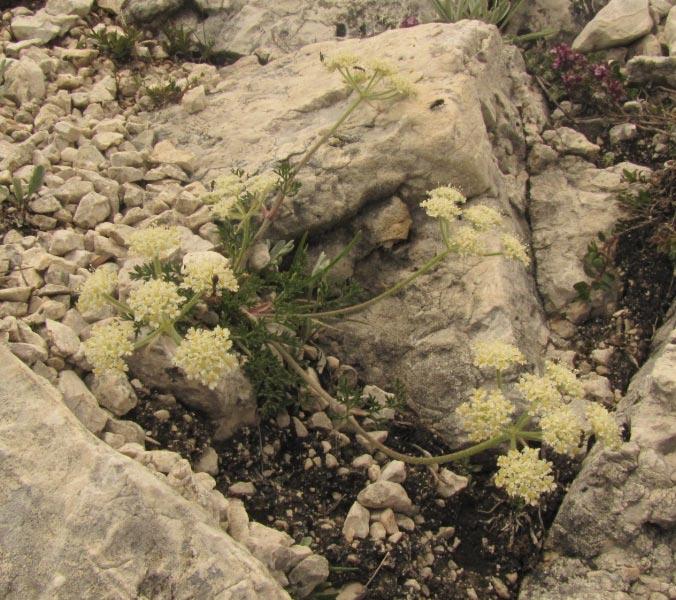 Dolomites (2 j)Col de Raiser Img_3810