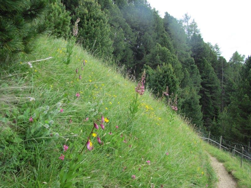 Dolomites (2 j)Col de Raiser Img_3812
