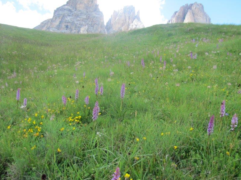 Dolomites (3j)Passo Sella Img_3923