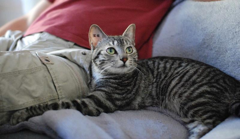 loula - LOULA, chatte européenne tigrée grise, née en Juillet 2015 Loula_20