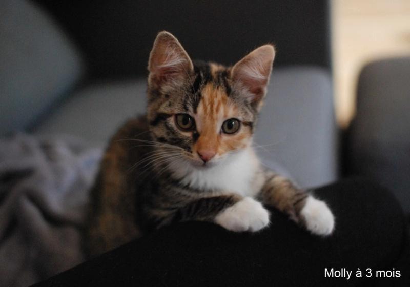 MOLLY, chatonne européenne tricolore, née le 15/04/16 Molly_18