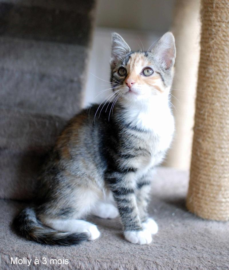 MOLLY, chatonne européenne tricolore, née le 15/04/16 Molly_21