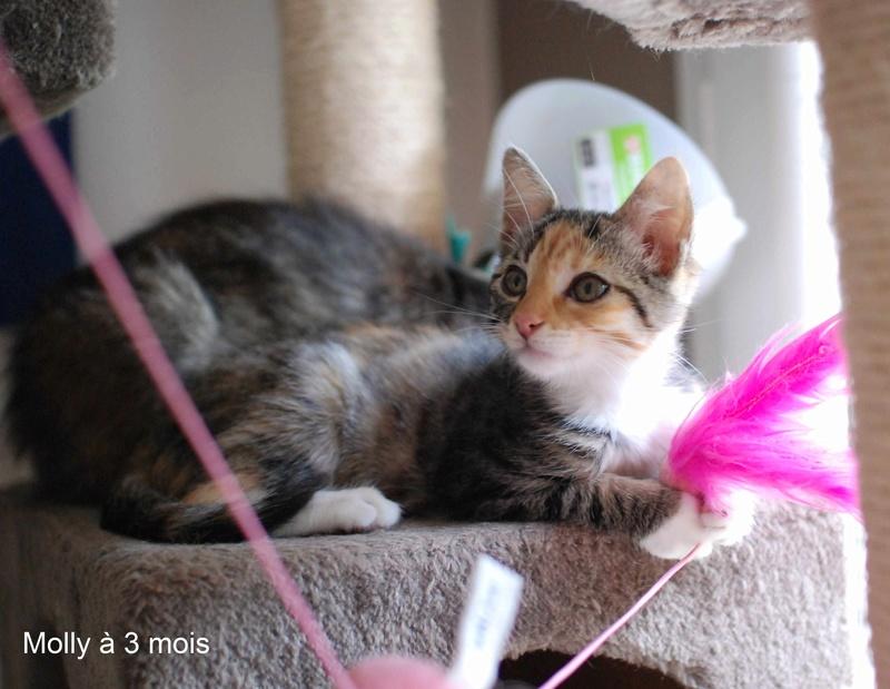 MOLLY, chatonne européenne tricolore, née le 15/04/16 Molly_22