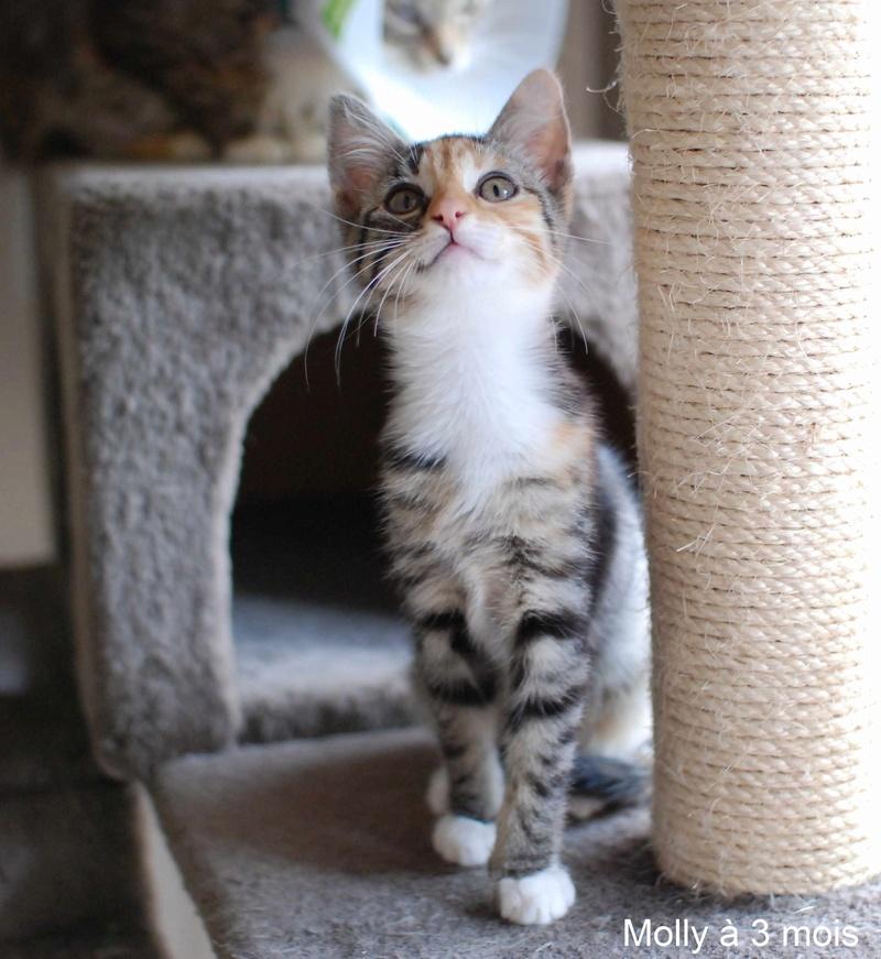 MOLLY, chatonne européenne tricolore, née le 15/04/16 Molly_23