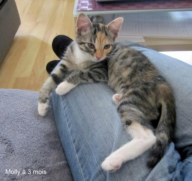 MOLLY, chatonne européenne tricolore, née le 15/04/16 Molly_24