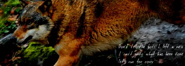 The Freak Show : ruffian's wolves  Wolf_m11