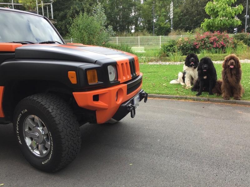 Photos de votre Hummer & animal de compagnie - Page 2 Img_4417