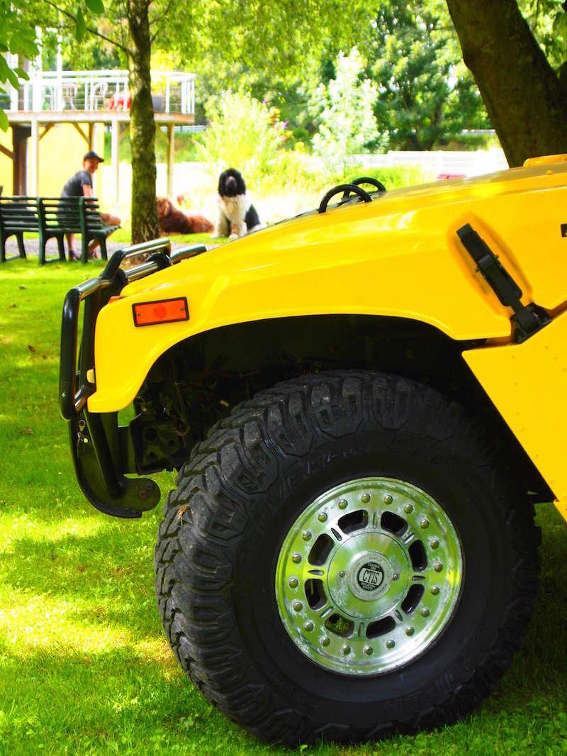Photos de votre Hummer & animal de compagnie - Page 2 P1013216
