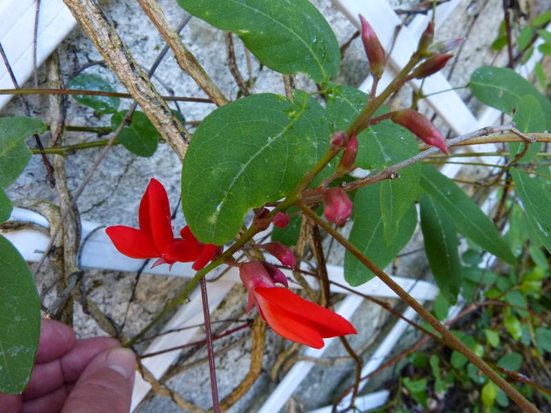 petits bouquets de juillet - Page 3 Campto10