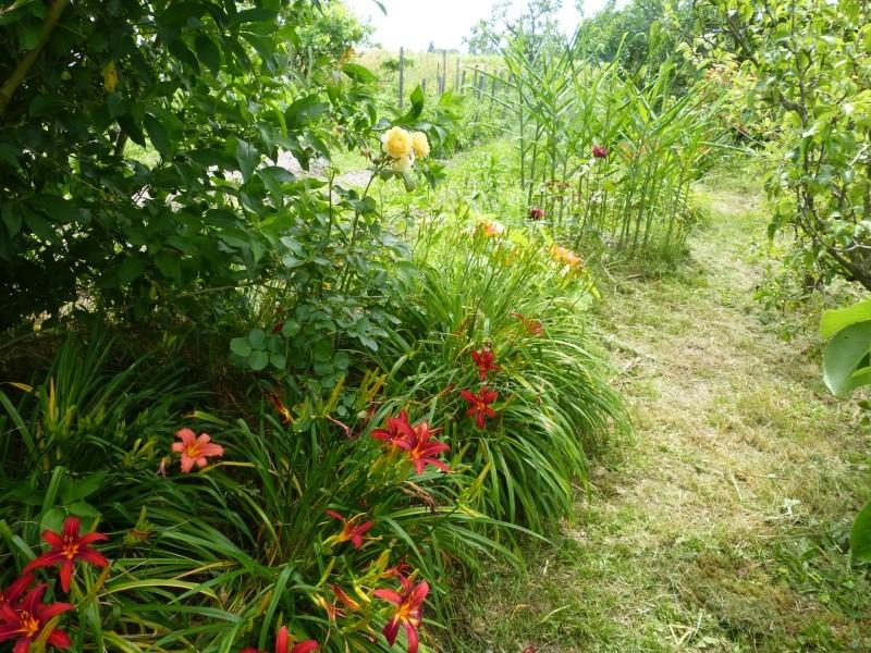 petits bouquets de juillet Florai13