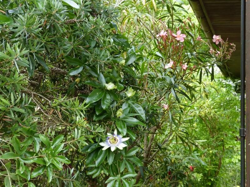 Plantes parfumées 2016 Passif10