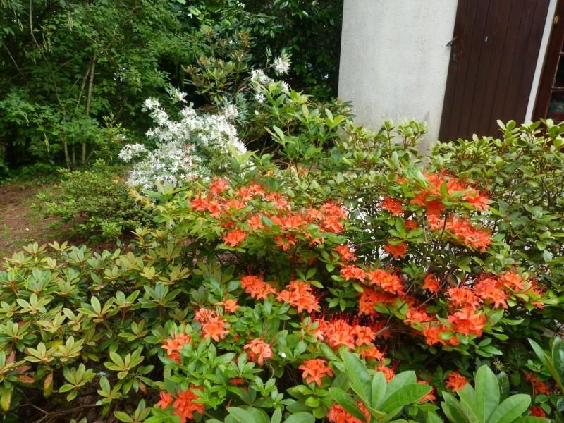petits bouquets de juillet Rhodod19