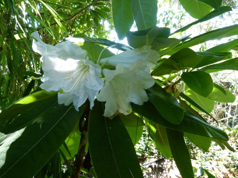 petits bouquets de juillet - Page 3 Rhodod22