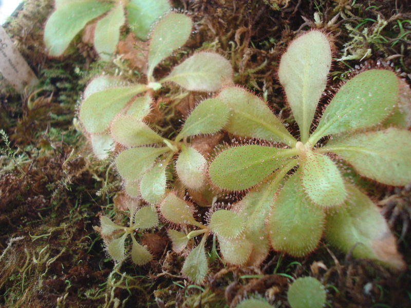 Les Plantes de Ted82 [tome 2] - Page 19 Dsc03529