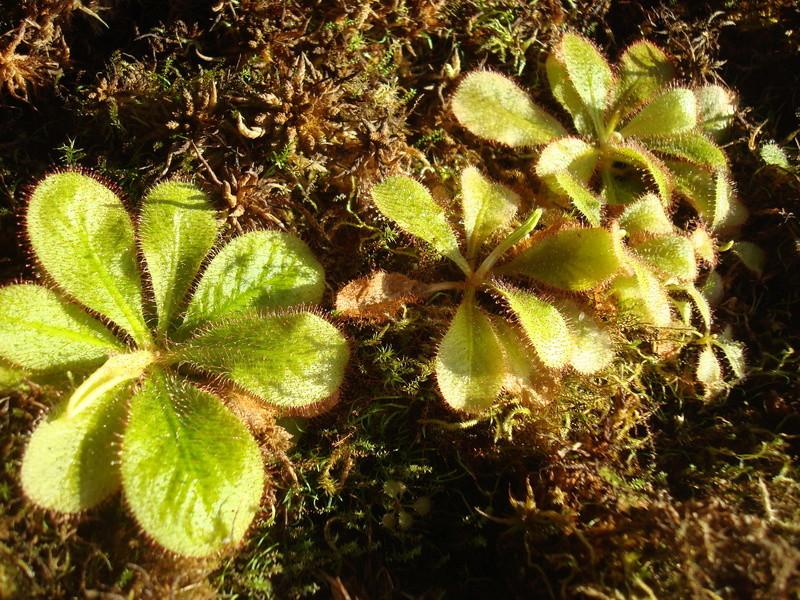 Les Plantes de Ted82 [tome 2] - Page 19 Dsc03531