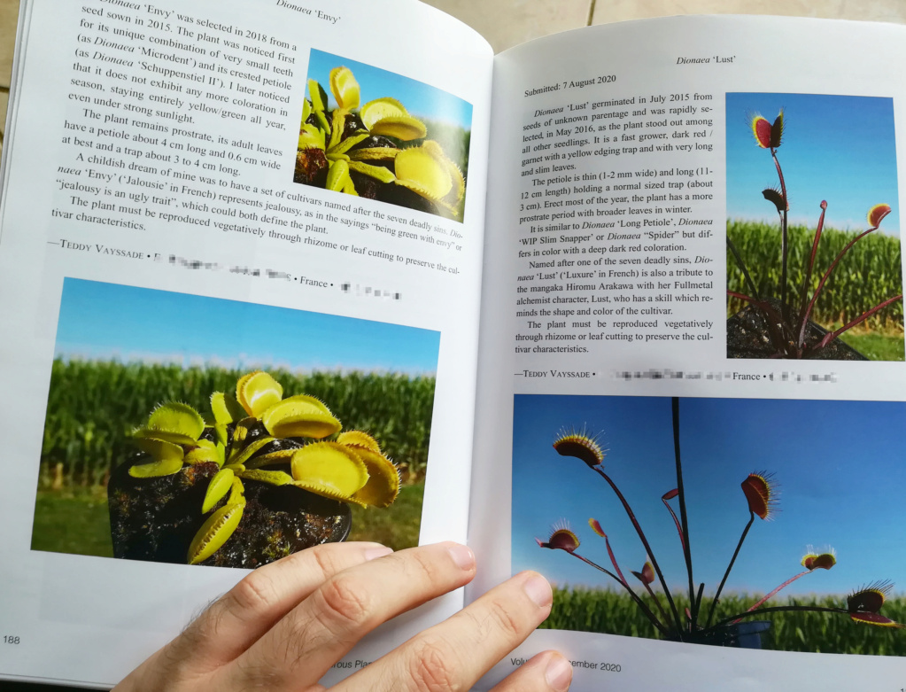 4 Cultivars Lust_e10