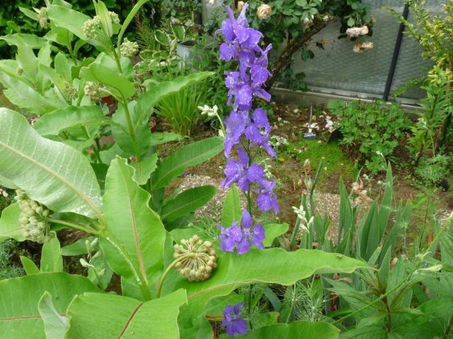 cadeaux du jardin, juin juin - Page 3 Delphi10