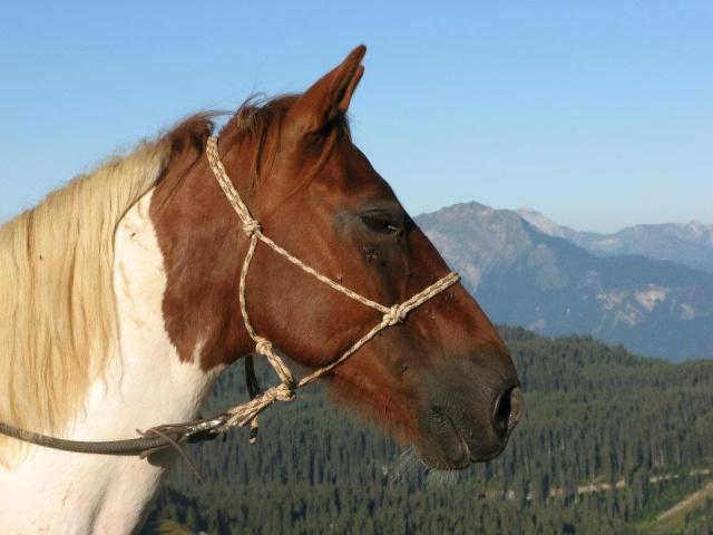 CALINOU  - ONC poney - né en 1999 - adopté en novembre 2012 par Stéphanie 39456110