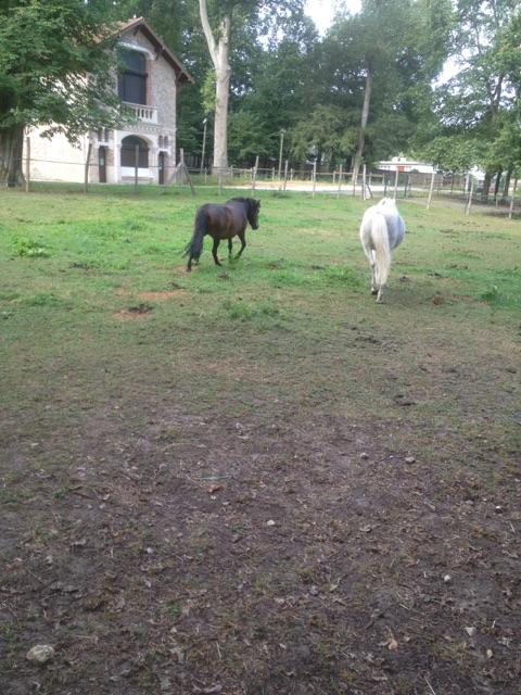 IDOLE - OI poney typée Shetland née en 1996 - adoptée en juillet 2016 par la ferme enfantine de Dammarie les Lys Img_0311