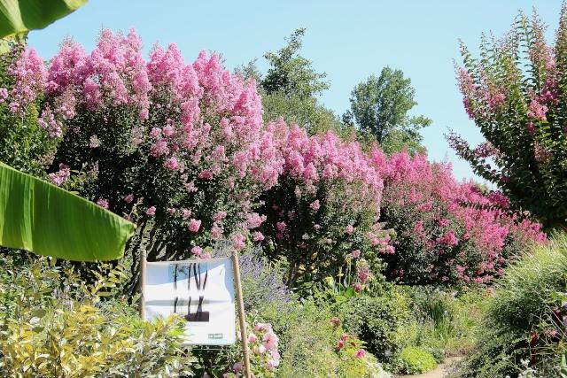 (40) Promenade fleurie du Lac de Mimizan-Aureilhan Allae_13