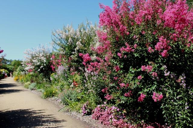 (40) Promenade fleurie du Lac de Mimizan-Aureilhan Allae_15