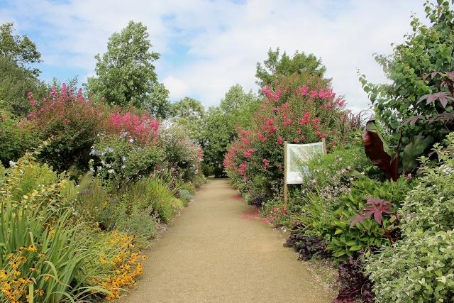 (40) Promenade fleurie du Lac de Mimizan-Aureilhan Allae_20