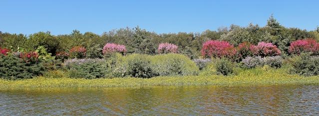 (40) Promenade fleurie du Lac de Mimizan-Aureilhan Cata_l10
