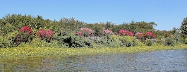(40) Promenade fleurie du Lac de Mimizan-Aureilhan Cata_l11