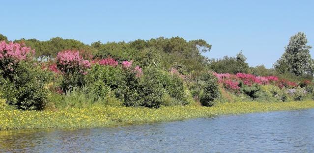 (40) Promenade fleurie du Lac de Mimizan-Aureilhan Cata_l12